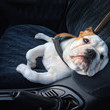 Never leave pets or people in a warm car