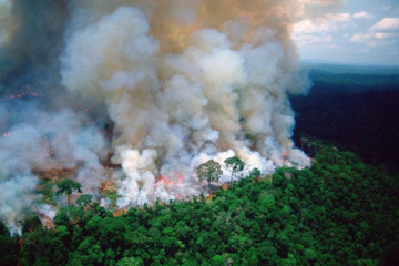 Here's How You Can Help The Amazon Rainforest Fires