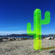 Fluorescent Cactus Collection