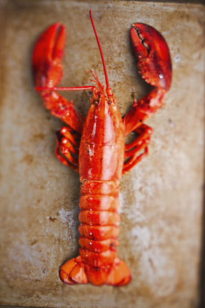 Lobsters Are A Mess