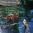 Cage Dive With Crocs in South Africa or Australia