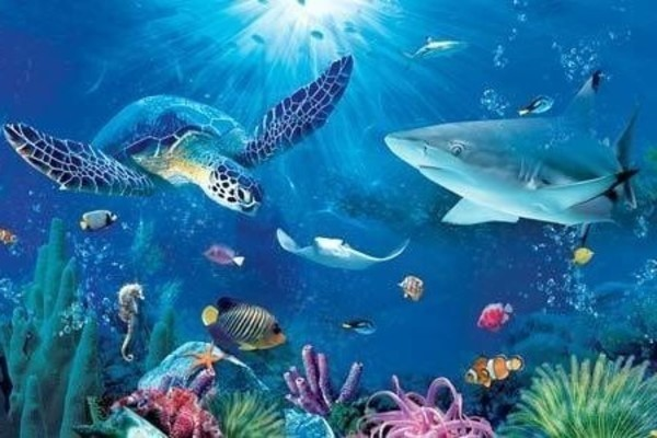 Image of: Animal Pictures Livingly Can You Name All These Sea Animals Trivia Quiz Livingly