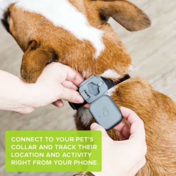 GPS Pet Tracker And Activity Monitor