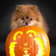 Puppy Pumpkin